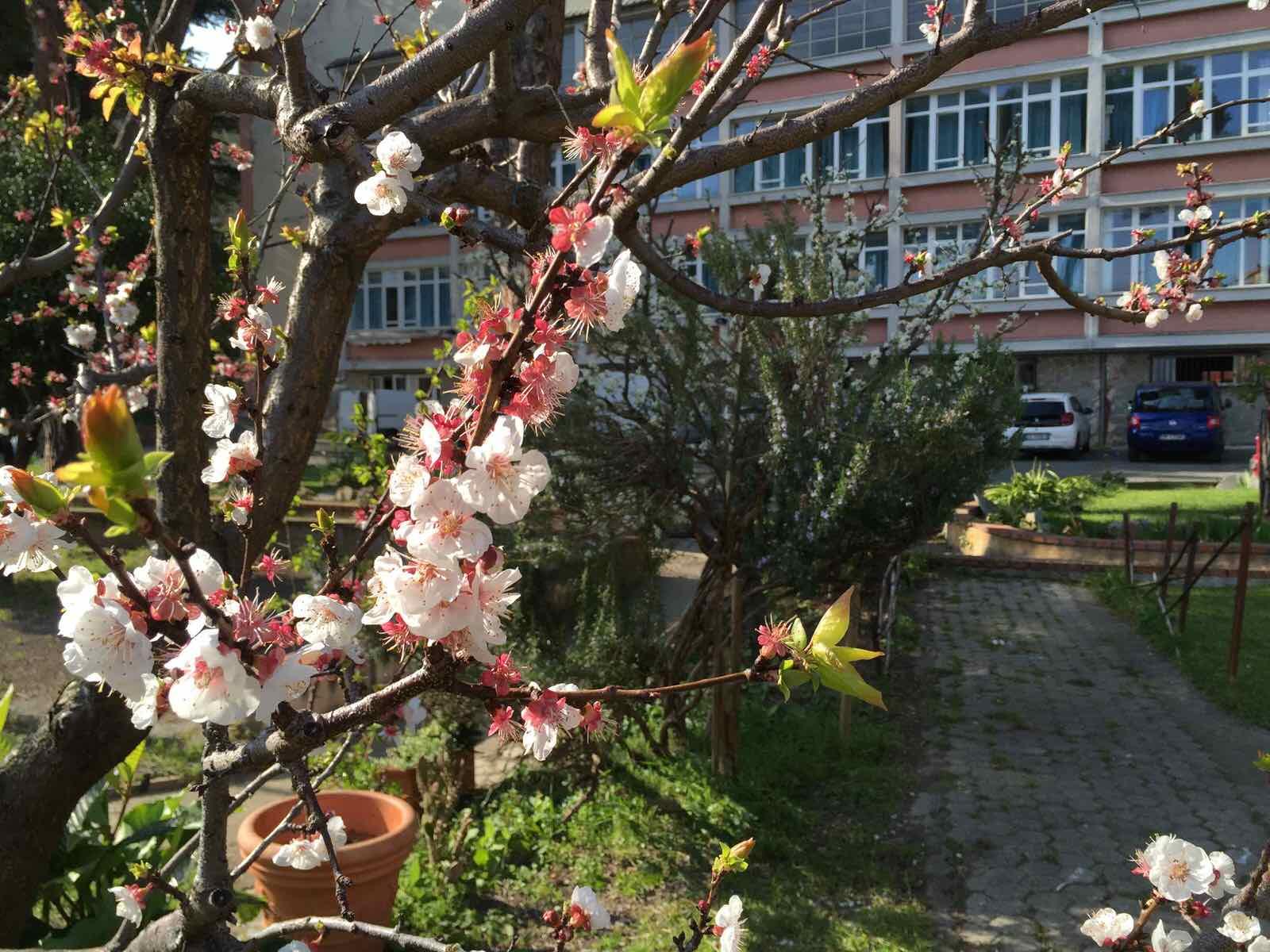 Centro Franco Chiarella - giardino 01