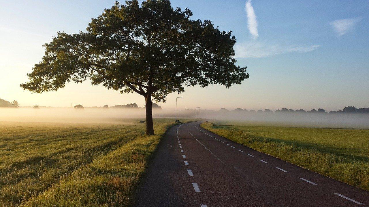 Strada con albero nella foschia